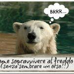 Come sopravvivere al freddo… senza sembrare un orso!!